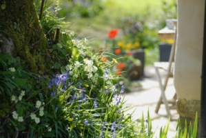Spring at Great Burrow Cottage, Devon, Self Catering